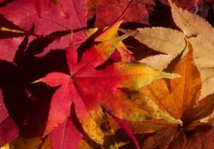 Drehbuch-Herbst